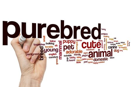 Purebred word cloud concept Banque d'images - 129453706