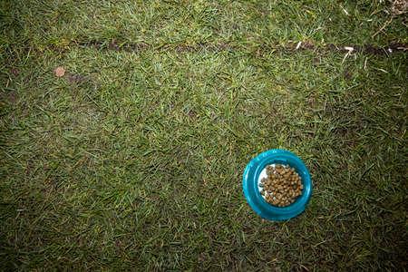 A bunny rabbits feeding bowl on a grass background