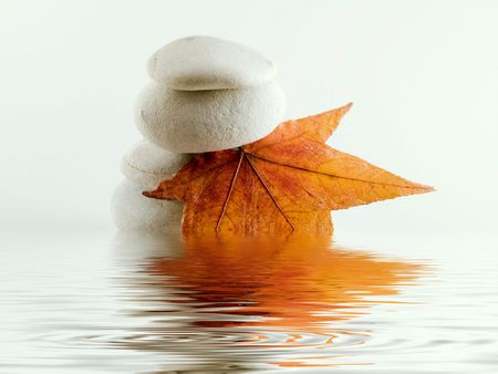 white off beach stones with fall  leaf water reflection photo