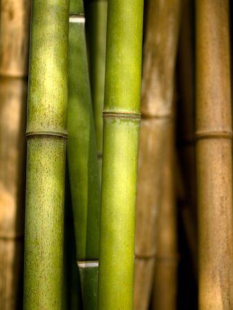 Bamboo shoots closeup