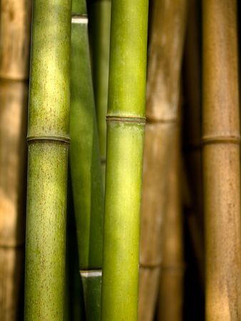 Bamboo shoots closeup
