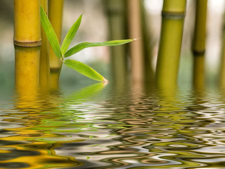 Bamboo shoots with water reflection Stock Photo