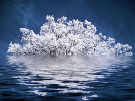 Infrared picture of a tree under water Stock Photo