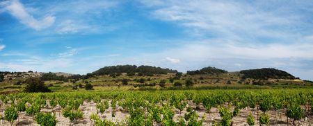 Panoramic grapevines landscape in Southeastern France
