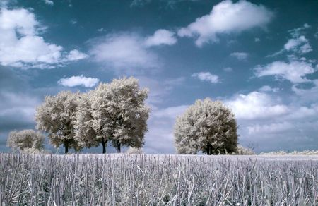 contryside: Infrared contryside landscape with freshly cut wheat on the foreground