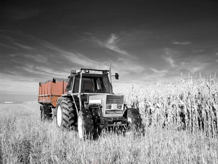 True infrared picture of a tractor between corn and wheat fields selective coloring