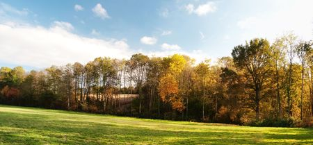 Panoramic scenic view of a countryside forest at fall