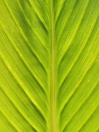 Macro of a green leaf against the sun photo