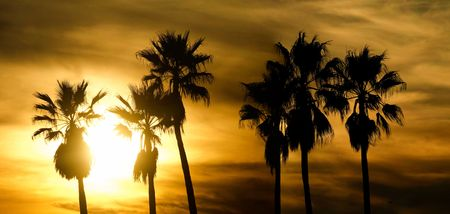 Panoramic scenic view of palm trees at sunset in Venice beach California