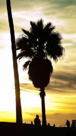 Vertical panoramic scene of palm trees at sunset in Venice beach California photo