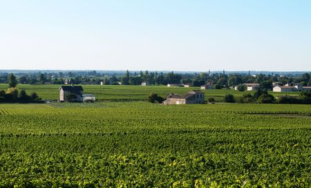 Vineyard in the village of Saint Emilion in France