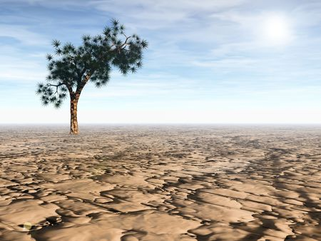 arid: 3D rendering of an isolated Joshua tree in arid desert under bright sun Stock Photo