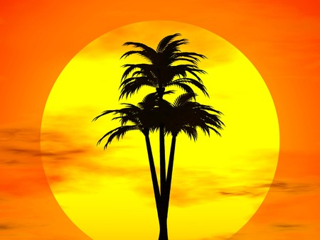 tree disc: 3D rendering of a coconut tree in front of the sun disc Stock Photo