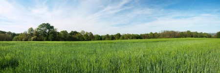 Panorama of a fresh green barley field in the French countryside