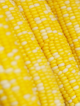 Background made of yellow and white corn cobs from Cameron Highlands Malaysia
