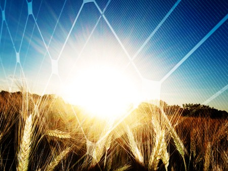 Golden wheat field at sunset  against the sun with solar panel