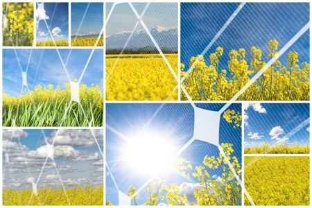 photovoltaic panel:  Blooming rapeseed with photovoltaic panel
