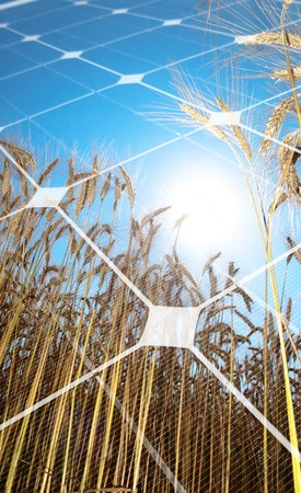 Golden wheat  field against the sun with photovoltaic panel Stock Photo - 8034077