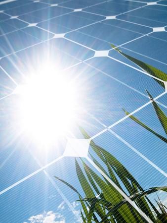 energia solar: Campo de trigo verde contra el sol con el panel fotovoltaico  Foto de archivo