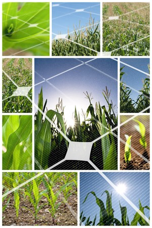 photon: Green corn field collage with photovoltaic panel