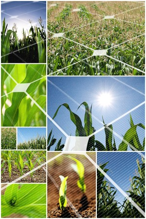solarcell: Green corn field collage with photovoltaic panel
