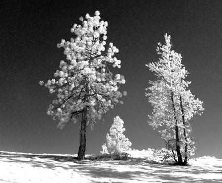 Infrared landscape photo