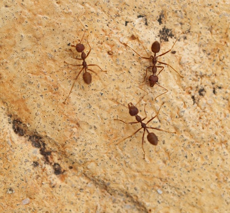 Group of ants Stock Photo - 8408165