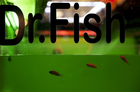 rufa garra: Fish spa