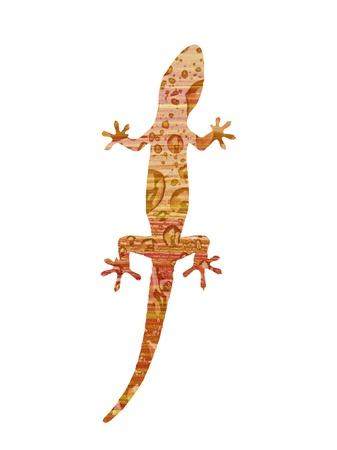 Gecko on white photo