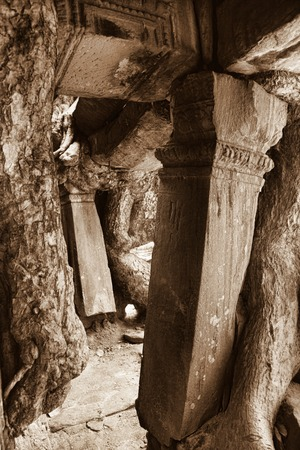 growing inside: Huge tree roots growing inside  Preah Khan temple in Angkor Stock Photo