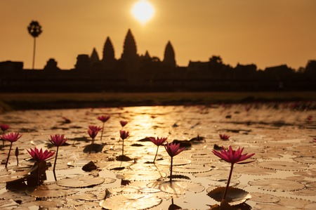 Beautiful sunrise at Angkor Wat temple with lily pond flowers