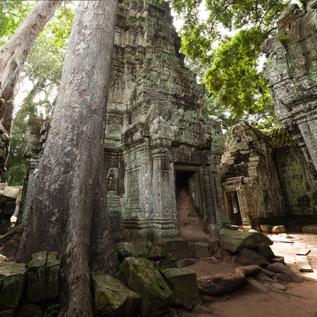 Tree growing in the temple jungle of Ta Prohm in Cambodia