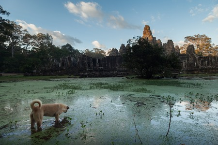Bayon temple with water and dog on the foreground