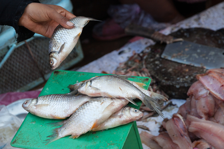 Fresh fish in local market on a weight scale Cambodia