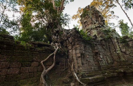 Ta Prohm temple in Angkor with large tree growing on the gapura