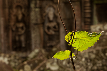 Devatas carving in Ta Prohm temple with green leaves