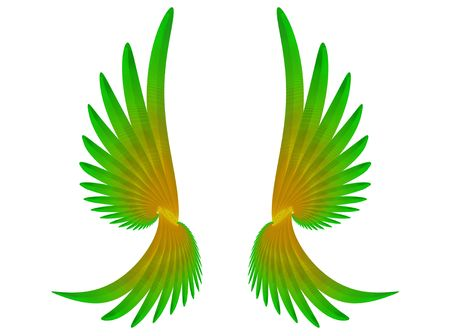 parot:  pair of parot wings over the  white. Computer genarated illustration.