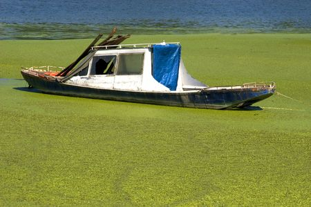 punt: an old boat in green river shore