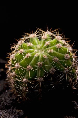 a small cactus on black background