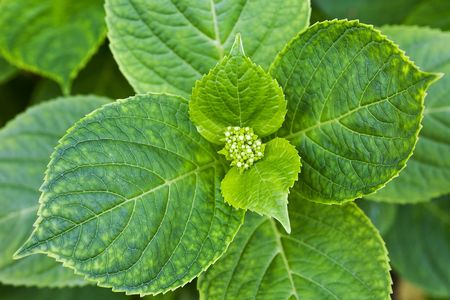 Closeup of fresh plant leaves from above. Stock Photo - 6989154