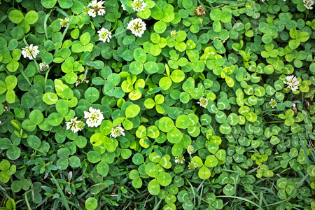 Green background with grass and clover