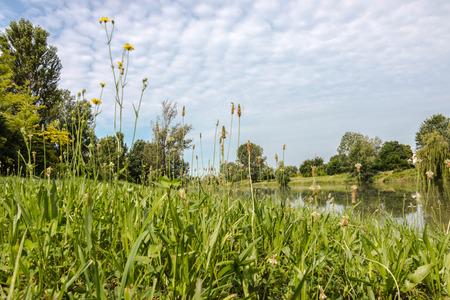 landscape riverside: landscape riverside summer Stock Photo
