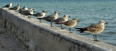 synchronous: Standing seagulls lined up in a diagonal on a dam, near the ocean.
