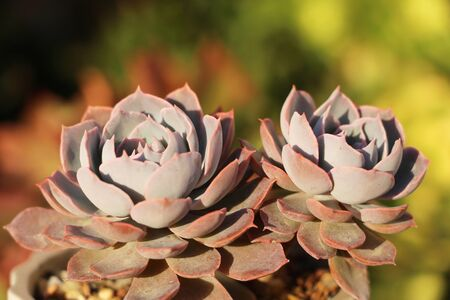 Close-up illustration of succulents in spring sunlight