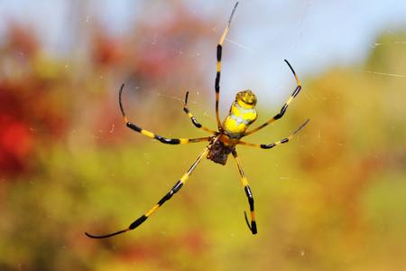 Color spider Stock Photo