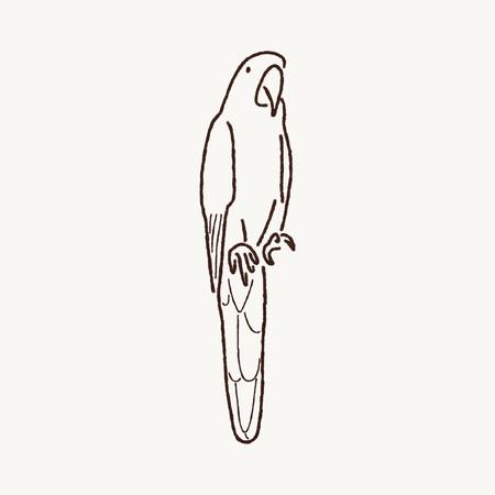 guacamaya caricatura: Macaw Arte de la historieta Foto de archivo