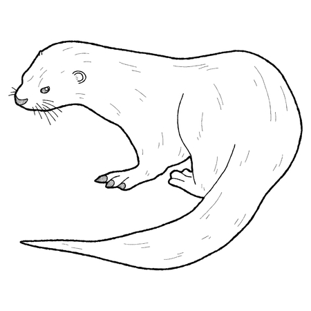 otter: African Clawless Otter