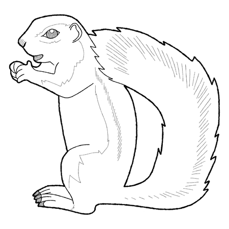 ground: African Ground Squirrel