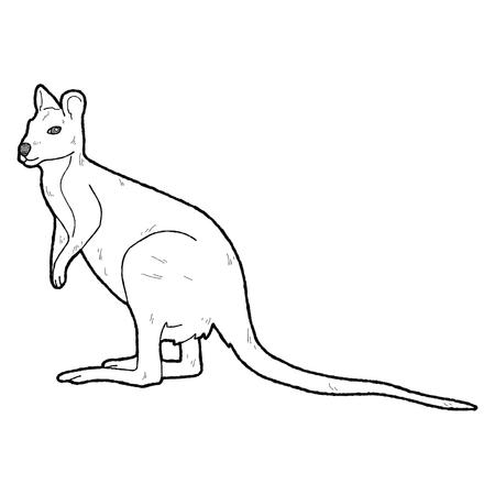 wallaby: Agile Wallaby