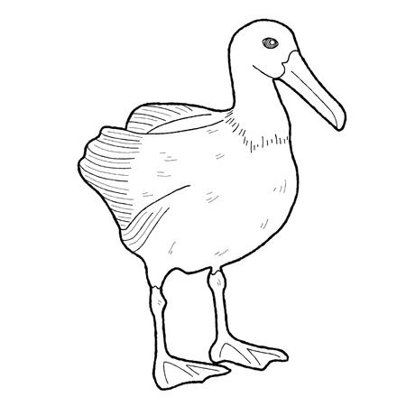 albatross: Albatross Galapagos Stock Photo